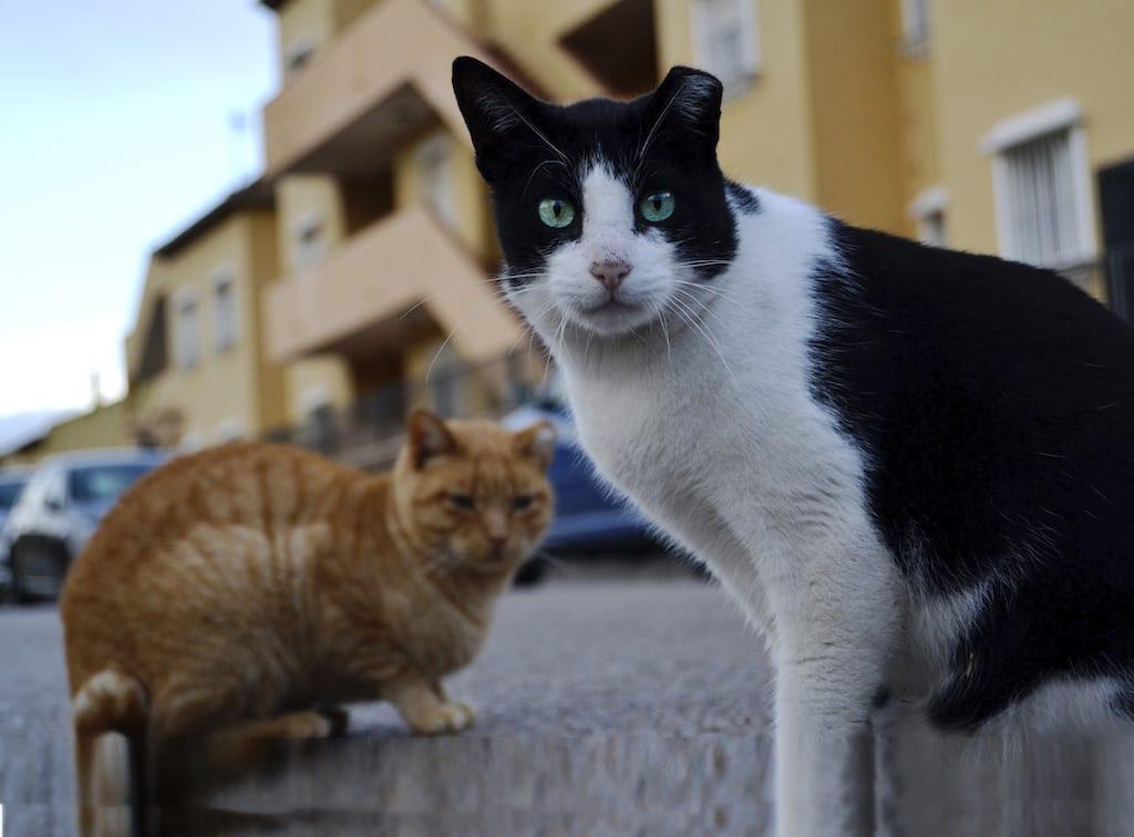 Coli y Mishi gatos