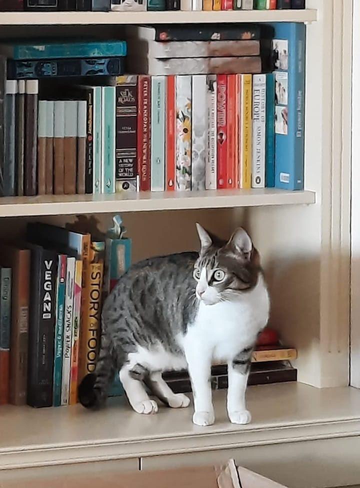 Chispito-bookshelf