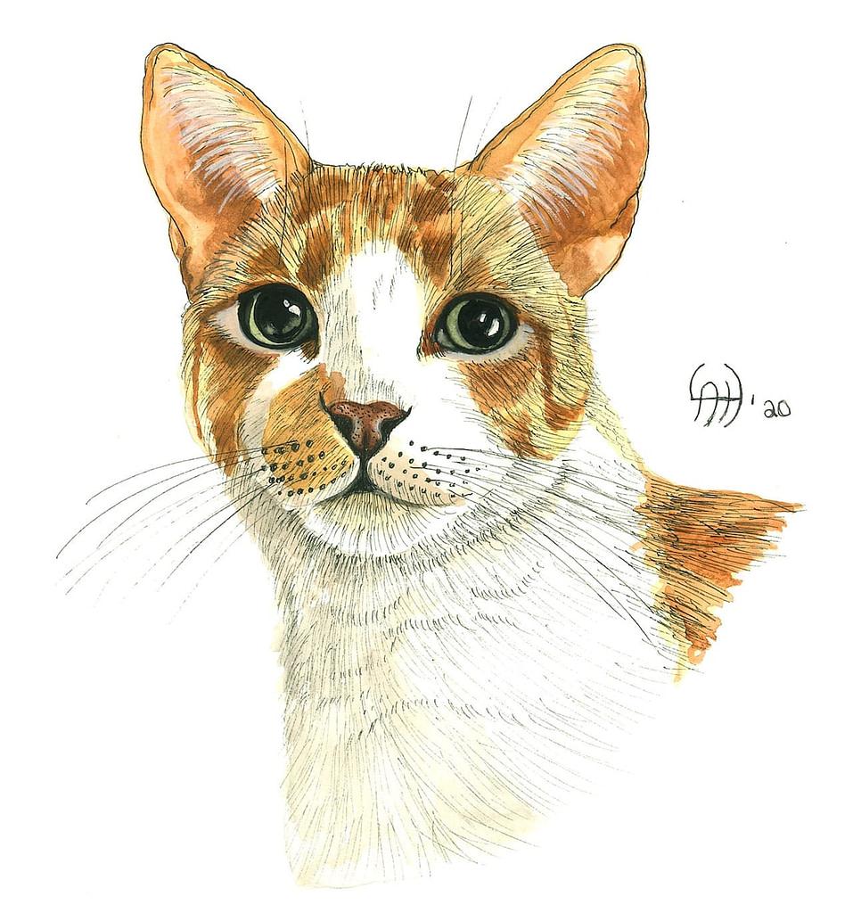 Cat Art - Linda Hughes