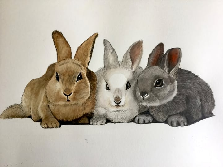 linda-rabbits