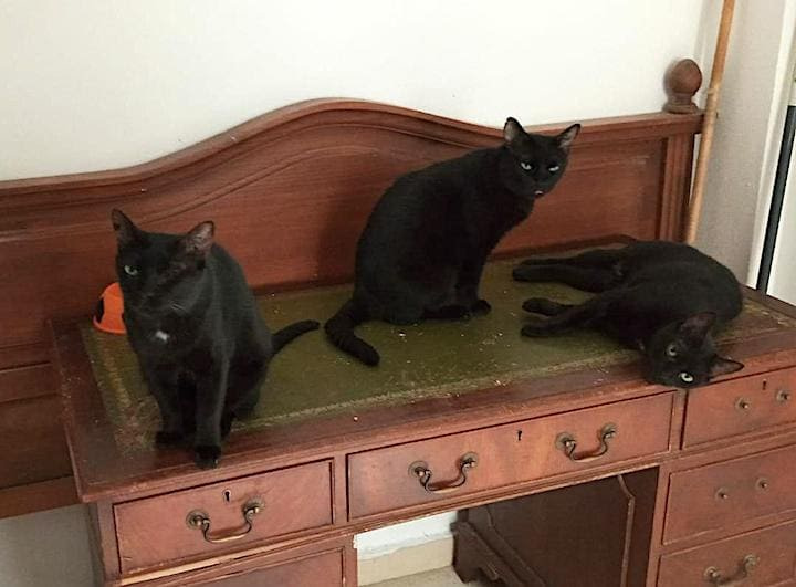3-gatos-negros