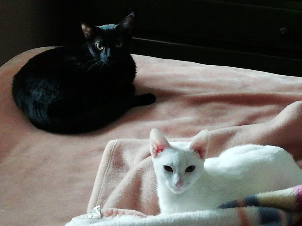 Baguira and Duchess
