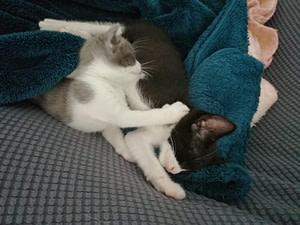 Dos pequeños fueron rescatados y adoptada