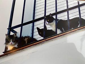 gatos-desaparecidos