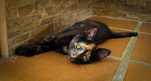 Opalo for adoption