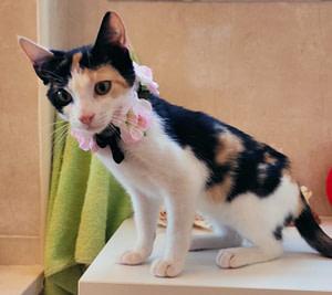 flower-cat4